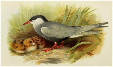 etymologia nazwy ptak https://etymologicznamenazeria.wordpress.com/2016/04/01/jak-piskle-zostalo-ptakiem/